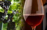 Un viticulteur devant le tribunal correctionnel pour avoir refusé d'utiliser un pesticide ?