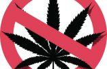 Cannabis : un danger supplémentaire, l'infertilité
