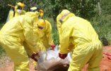 Ebola : le facteur génétique déterminerait l'issue mortelle ou non pour le patient contaminé