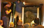 Calais – Des migrants s'introduisent dans un camion et se retrouvent face à un ours polaire !