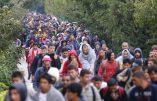 Ce sont déjà plus de 2 millions d'immigrés qui ont mis pied en Europe selon la Commission des Episcopats de la Communauté Européenne (COMECE)