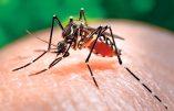 Premiers cas de virus Zika en Europe – Alerte dans six pays européens