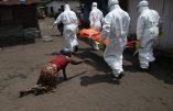 Ebola : déjà plus de 7.300 morts