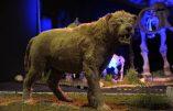 Clonage d'un lion disparu depuis 12.000 ans