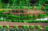 Agriculture – La permaculture expliquée aux nationalistes