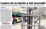 """A Angers, """"l'arbre de la laïcité"""" trépasse pour la quatrième fois"""