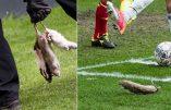 Championnat du Danemark : Copenhague et le qu'en dix ratons…