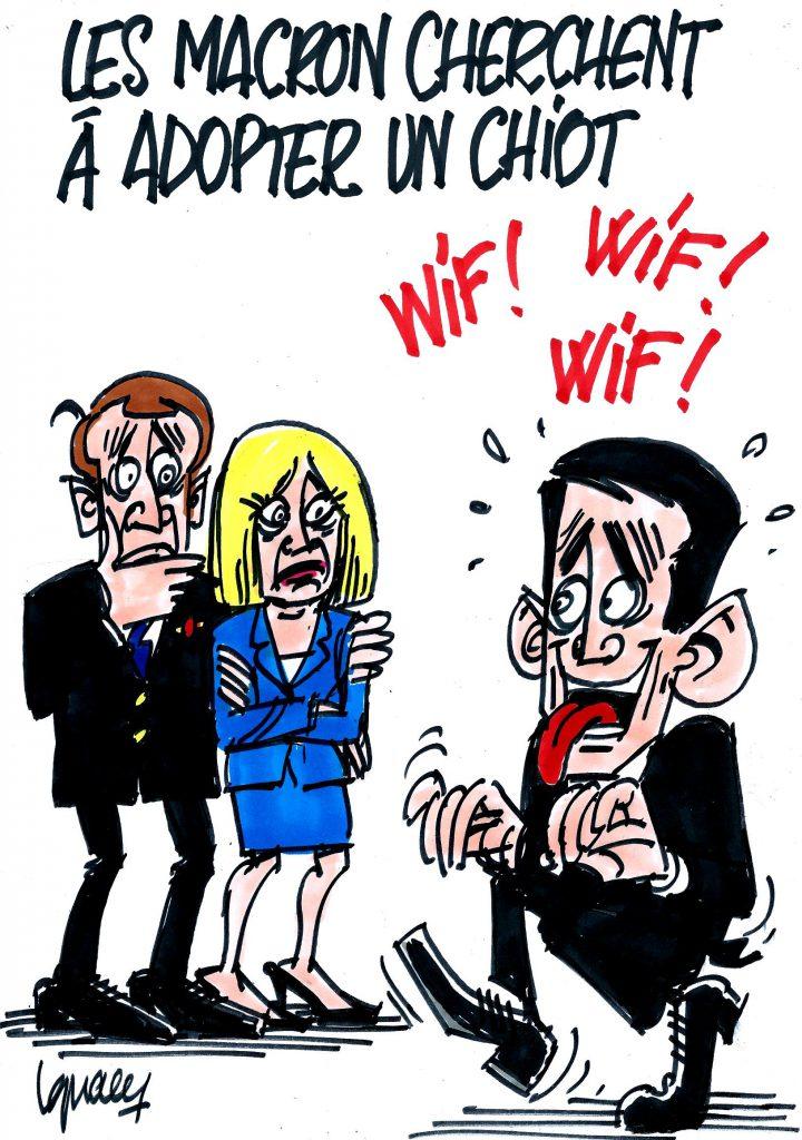Ignace - Les Macron veulent adopter un chiot