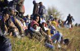 Le bilan migratoire des pays d'Europe en 2017