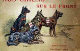 Images d'archives – Les chiens sur le front (1914-1918)