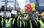 Le mouvement Nation parmi les Gilets Jaunes belges