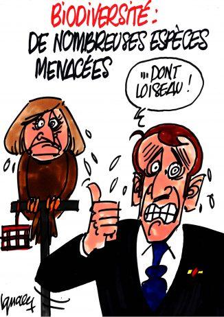 Ignace - Macron et la biodiversité