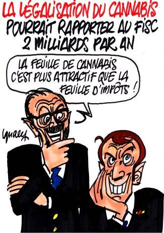 Ignace - Avantage de la légalisation du cannabis