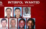 "Interpol traque les ""crimes contre l'environnement"""